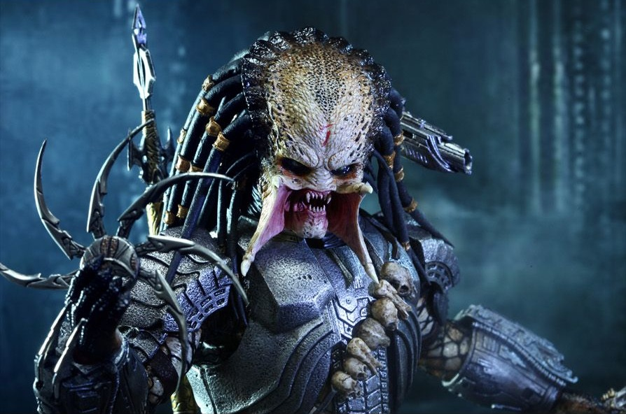 predator-photo-predator-958113